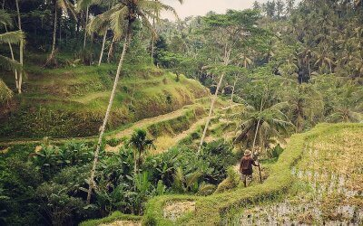 trekking randonnée en indonésie