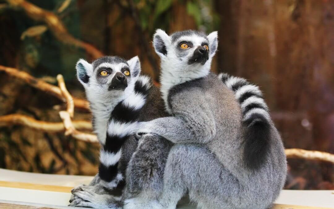Pourquoi faut-il choisir de visiter le Zoo Pairi Daiza?